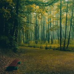Перше дихання осені.
