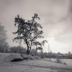 Туманное утро близ карьера. Январь. 2019