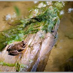 Царевна-лягушка в ожидании