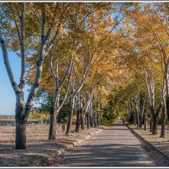 Осенними аллеями