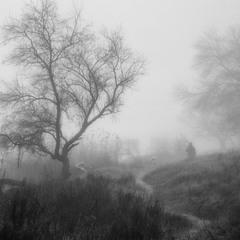 Срібний туман