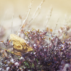 Чебрецева весна