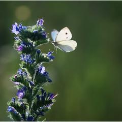 Butterfly =)