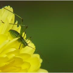 Зелень - золото природы...
