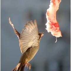 Хыщный Птиц =)