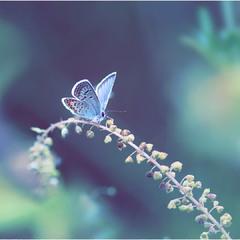 Голубая мечта...