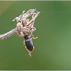 Найди паука...