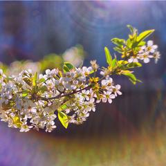 Осяйна весна