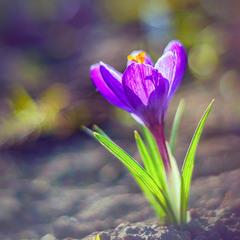 Заворожений весною