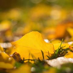 Моменти осені