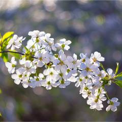 Сонячний цвіт
