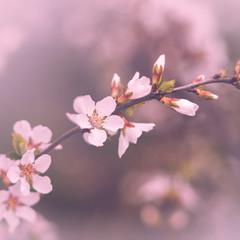 Весняний серпанок