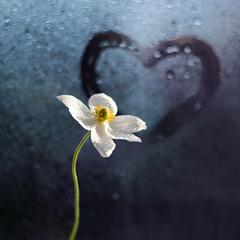 З весною в серці