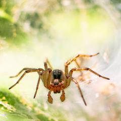 Павукова хатка