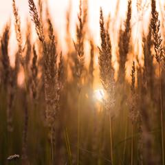 Заблукало сонце у траві...