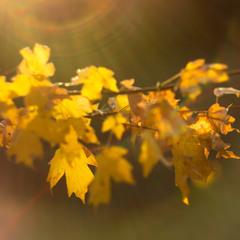 Лагідне сяйво осені