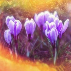 Весна в стилі фентезі )