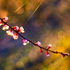 У мареві весняних снів