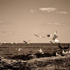 They flew away
