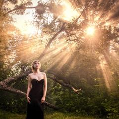 When The Sun Loves Trees