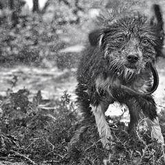Не собачье это дело  - душ принимать!