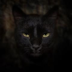 ...если ты долго смотришь в бездну, то бездна тоже смотрит в тебя