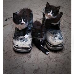 У вас третьего ботинка не найдется?