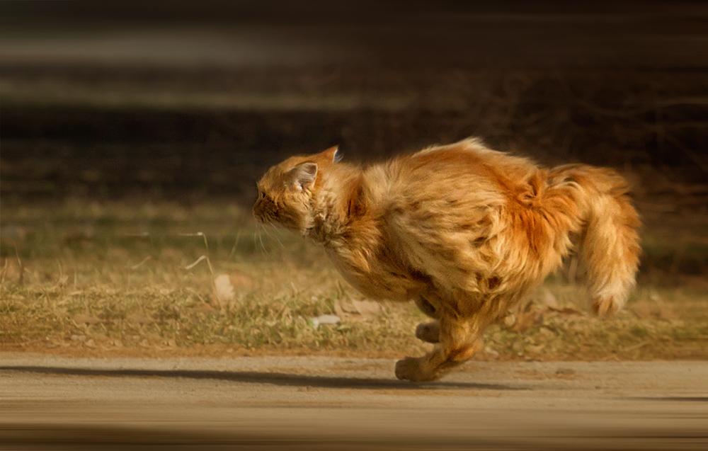 читатели, картинка кот бежит на работу этого