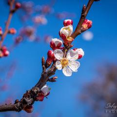 Весняна квітка...
