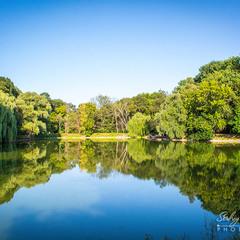 Лісове озеро...