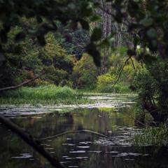 Сквозь лесные дебри