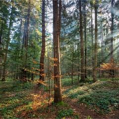 Лесными тропинками