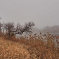 Раскинуло утро туманные сети