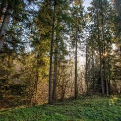 Очарование утреннего леса