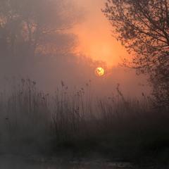 сонце в туманi - 2