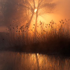 сонце в тумані
