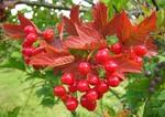 Осенних красок маленький костер.