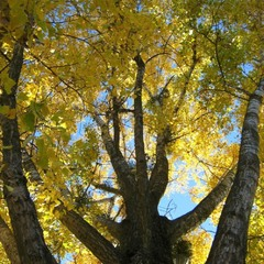 Осенняя Оранта.