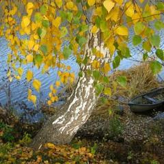 Осень к берегу причалила.