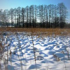 Снежный ландшафт луговой.