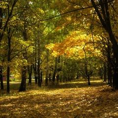 Луч света в осеннее царство листвы.