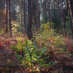 Вечерний лесной колорит.