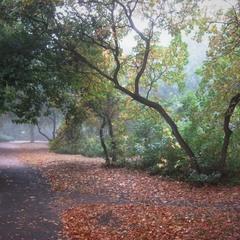 Пахнет осень туманами