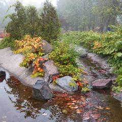 Осенние туманы.