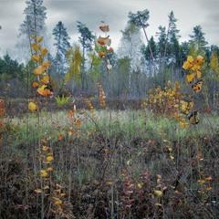 Осенний вернисаж пасмурным днем