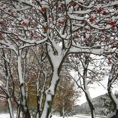 Снег приглушил городскую суету.