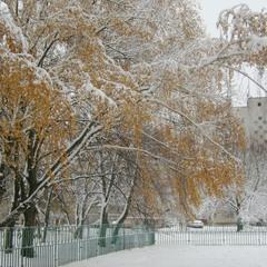 Утро первого снега.