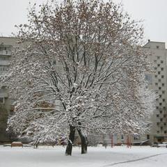 Зима спешит вступить в свои права.