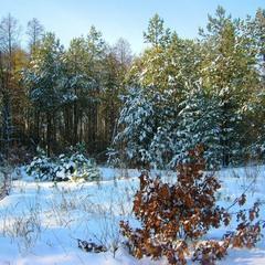 Зимний день со снегом. Из архива.