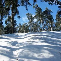Поёт Зима - аукает стозвоном сосняка.
